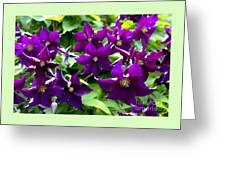Clematis Flowers Greeting Card by Corey Ford