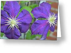 Clematis Friends Greeting Card