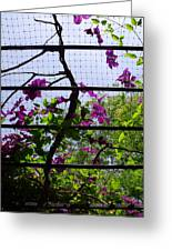 Clematis I Greeting Card