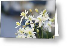 Clematis II Greeting Card