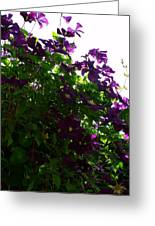 Clematis IIi Greeting Card