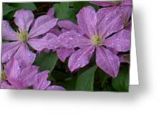 Clematis In The Rain Greeting Card