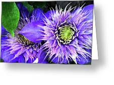 Clematis Multi Blue Greeting Card