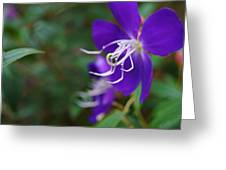 Clematis On The Side Greeting Card