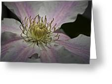 Clematis Study 1 Greeting Card