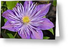 Clematis 'sunnyside' Greeting Card