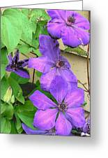 Clematis Trail Greeting Card