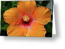 Clementine Hibiscus Greeting Card