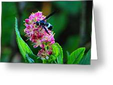 Clethra And Wasp Greeting Card
