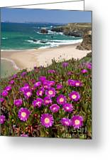 Cliff Flowers Greeting Card