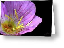 Climactic Evening Primrose Greeting Card