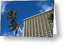 Climbing A Palm Tree Greeting Card