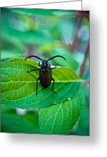 Climbing Beetle Greeting Card
