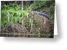 Climbing Gator Greeting Card