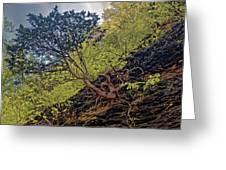 Climbing Tree Roots Greeting Card