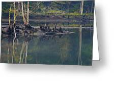 Clinch River Beauty Greeting Card