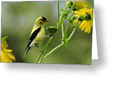 Clinging Goldfinch Greeting Card