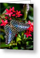 Clipper Butterfly 1 Greeting Card