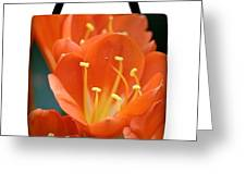Clivia Tote Bag Greeting Card