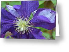 Close Clematis Greeting Card