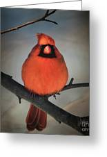 Close Encounter On A Blustery Day Greeting Card