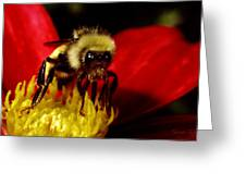 Close Up Bee Greeting Card