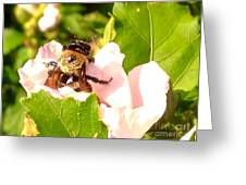 Close Up Bumble Bee Climbing Out Of Hibiscus Flower Greeting Card