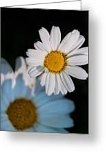 Close Up Daisy Greeting Card