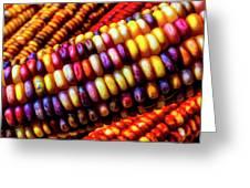 Close Up Indian Corn Greeting Card