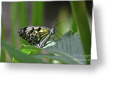 Close Up Look At A Paper Kite Butterfly On Foliage Greeting Card