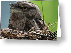 Close Up Look At A Tawny Frogmouth Sitting In A Nest Greeting Card