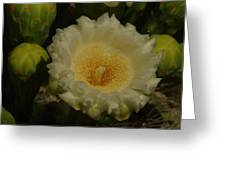 Close Up Of A Cactus Bloom. Greeting Card