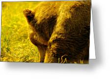 Close Up Of A Grizzily Greeting Card