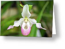 Close Up Of A Orchid Greeting Card