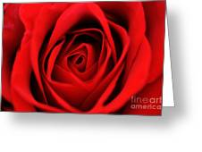 Close Up Of A Rose Greeting Card