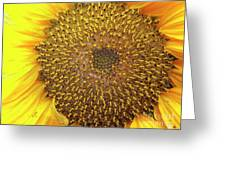 Close Up Of A Sunflower Head Greeting Card