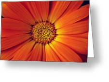Close Up Of An Orange Daisy Greeting Card