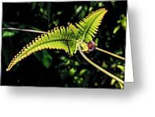 Close Up Of An Uluhe Fern  Greeting Card