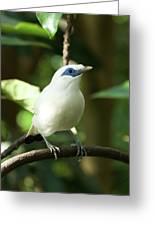 Close-up Of Bali Myna Bird In Trees Greeting Card
