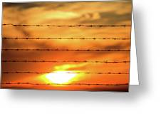 Close-up Of Barbed Wire At Sunset  Greeting Card