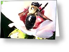 Close Up Of Bumble Bee On Flower Greeting Card
