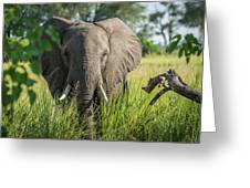 Close-up Of Elephant Behind Bush Facing Camera Greeting Card