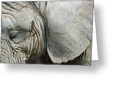 Close Up Of Eye And Ear Of An Elephant Greeting Card
