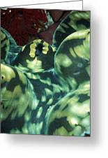 Close-up Of Giant Clam, Tridacna Gigas Greeting Card