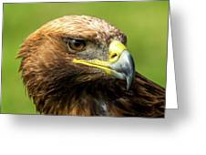 Close-up Of Golden Eagle With Turned Head Greeting Card