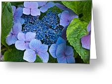 Close-up Of Hydrangea Flowers Greeting Card
