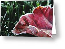 Close Up Of Leaf And Frost Greeting Card