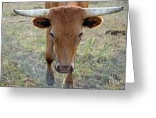 Close Up Of Longhorn Head Through Fence Greeting Card