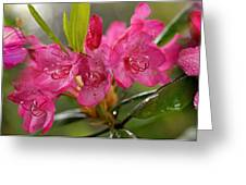Close-up Of Pink Horatio Flowers Greeting Card