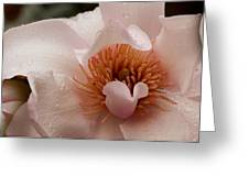Close-up Of Pink Ladies Flowers Greeting Card